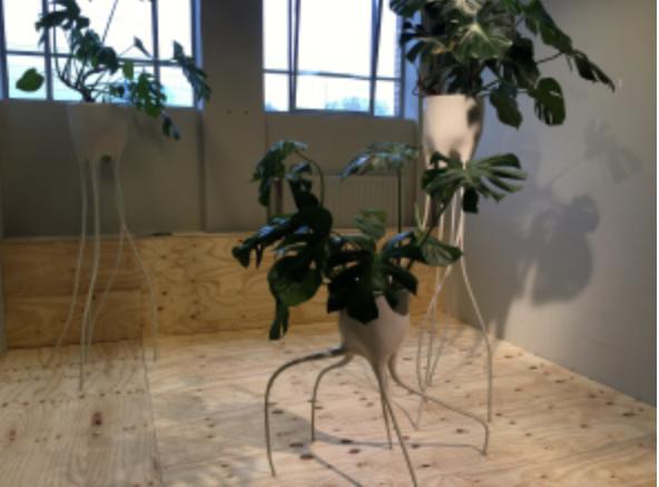 Tim van de Weerd, vos plantes vont dépoter…….